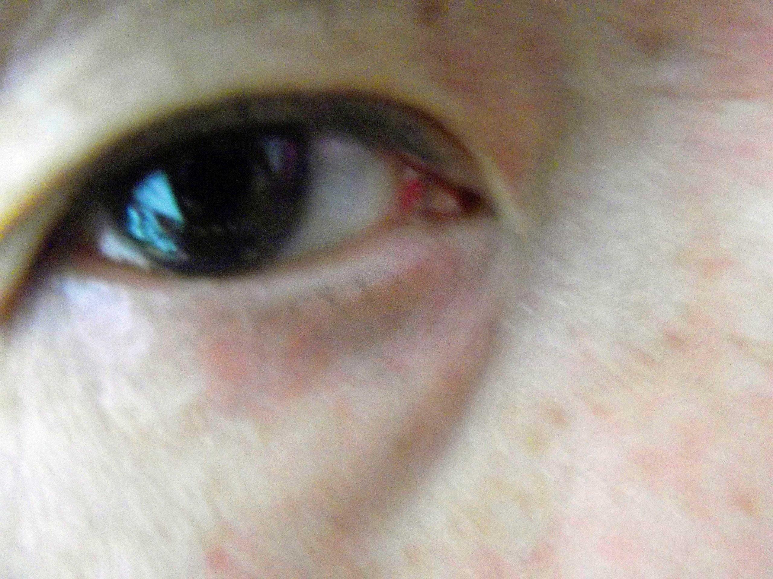 """レーシック手術を悩んでいるあなたへ!!目の手術-レーシック両眼-""""PRK""""手術の予定-自分の眼を壊れかけのコンデジで最後に撮影した!!"""